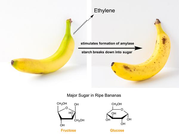Gluten-Free Banana Marble Loaf